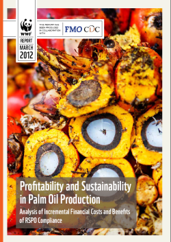 news - FMO Study: Sustainable palm oil is good for business
